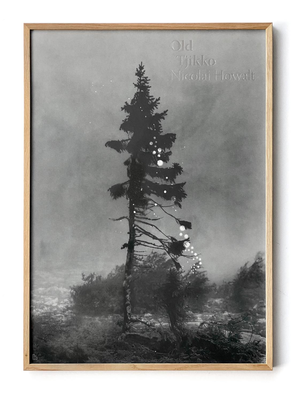 Framed Old Tjikko poster by Nicolai Howalt
